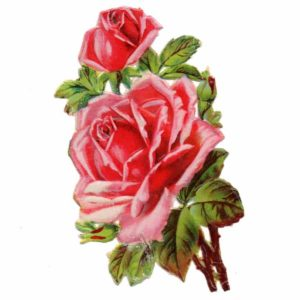 ruusukiiltokuva