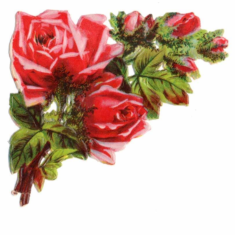 Ruusujen hehkua kiiltokuva